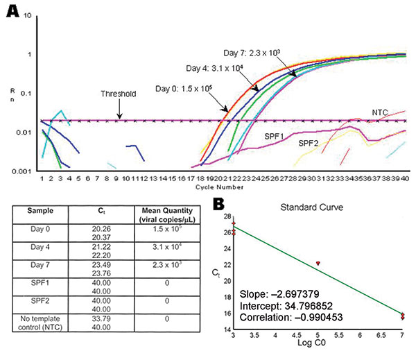 Example of the decrease on Taura syndrome virus (TSV) genome copy number within tissue cell culture flasks exposed to TSV. A) Real time reverse transcription–polymerase chain reaction plots and mean quantity of TSV copies/μL from tissue cell culture media collected at days 0, 4, and 7 postinfection from MA-104 cell flasks injected with TSV-infected shrimp hemolymph. Samples of tissue cell culture media collected from FrhK-4 and BGMK cell culture flasks inoculated with TSV-infected hemolymph or h