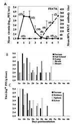 Thumbnail of A) Viremia and neutralizing antibody profiles in F1 Florida cotton rats serially sacrificed at daily intervals after infection with 3.2 log10 PFU of Everglades virus strain FE4-71k administered subcutaneously in the left thigh. Lines on each graph represent the geometric mean viremia or mean 80% plaque reduction neutralization test (PRNT) antibody titers; the number of rats bled at each time point is denoted in parentheses above each point. Error bars denote standard deviations. Eve