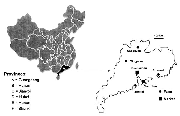 Geographic distribution of the farms and market examined in this study. The diagram on the left identifies the six provinces relevant to this study. The diagram on the right is an enlarged map of Guangdong Province showing the locations of the four farms and the capital city Guangzhou, where the live animal market was located. Also shown is Shenzhen, where civets from live animal markets were tested by Guan et al. in May 2003 (5).