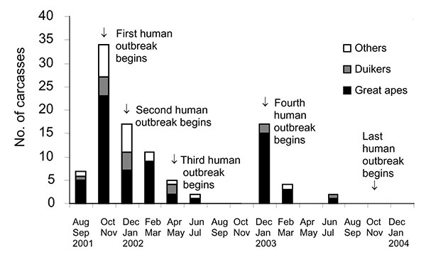 Temporal distribution of carcasses found in the forest straddling the border between Gabon and the Republic of Congo (2001–2003). The duration of human outbreaks is also shown. Two peaks of mortality were observed: the first occurred in the Ekata region (Gabon) from November to December 2001 and the second from December 2002 to February 2003 in the Lossi gorilla sanctuary (Republic of Congo).