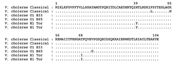 Amino acid sequence alignment of CT-B subunit of Vibrio cholerae O1 classical, El Tor, and Mozambique (B33 and B65) strains. Identical amino acid residues are indicated by a period. Amino acid sequences of ctxB of V. cholerae classical (AAL60524.1; AAM47189.1) and El Tor (AAM74192.1; AAM77066.1) are from GenBank.