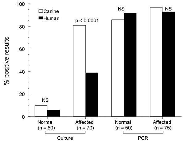 Rates of detection of Malassezia pachydermatis on canine and human skin by 2 laboratory techniques. A normal group of dogs and a group known to harbor M. pachydermatis infection, paired with their respective owners, are represented. NS, nonsignificant; PCR, polymerase chain reaction.