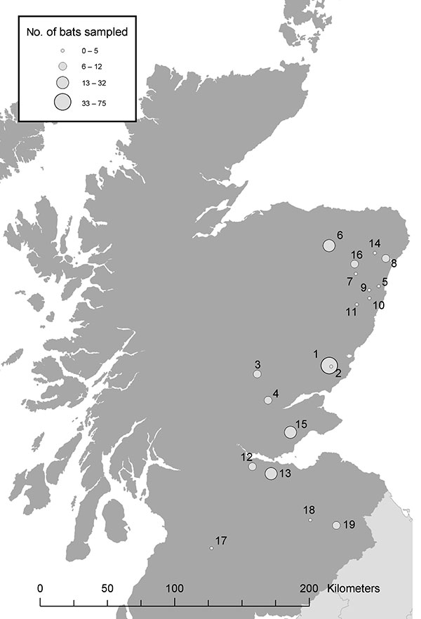 Bat sampling locations in southern and eastern Scotland. The circles indicate both the location (number) and an estimate of the number (size) of bats sampled.