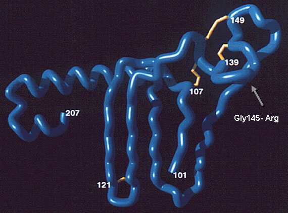 "Gly/Arg 145 mutant in the projecting amino acid 139–147 antigenic loop of the ""a"" determinant. This mutant produces false-negative results in some commercial assays. Image courtesy of Y.C. Chen et al. (11)."