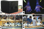 Thumbnail of A) UV light box for screening hands for evidence of contamination with fluorescent dye; B) example of fluorescence on contaminated hands; C) stacked poultry in cages at a county fair; D) poultry judge moved from cage to cage, handling each bird and passing bird to exhibitor.