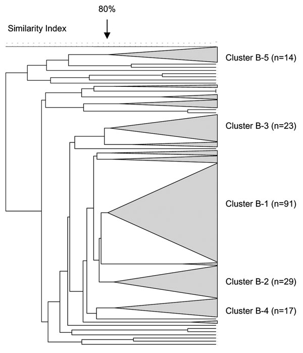 Pulsed-field gel electrophoresis dendrogram indicating the genetic relationship among serogroup B meningococcal isolates in South Africa, August 1999–July 2002.
