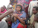 Thumbnail of Polio vaccination of a nomadic child in Chad. While children and woman in the camp received vaccinations by public health workers, the livestock in the camp received vaccinations by veterinarians. Source: Project Santé des Nomades au Tchad.