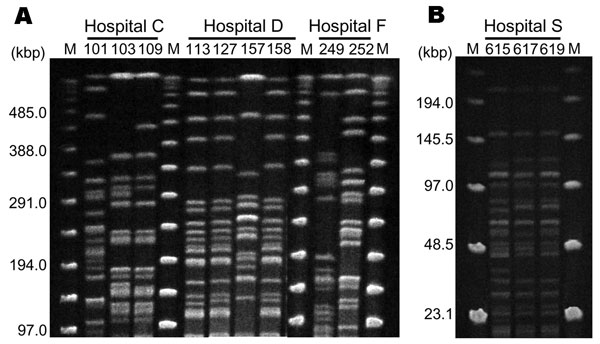 A) Pulsed-field gel electrophoresis (PFGE) fingerprinting patterns of SpeI-digested total DNA preparations from Pseudomonas aeruginosa. M, Lambda ladder PFGE molecular mass marker (Bio-Rad, Hercules, CA, USA). Strains 103 and 109 show similar patterns, which suggests probable nosocomial transmission of rmtA-positive strains in hospital C. Strains 113, 127, and 158 also demonstrate similar patterns, which implies possible nosocomial transmission in hospital D. However, 2 different PFGE patterns are observed in hospitals C, D, and F, which suggests transfer of plasmids carrying 16S rRNA–methylase genes among P. aeruginosa strains with different genetic backgrounds. B) SmaI-digested total DNA preparations from Acinetobacter baumannii isolated from hospital S. Three strains demonstrate the same PFGE pattern, which suggests probable nosocomial transmission of armA-positive A. baumannii in hospital S. M, lambda ladder low-range PFGE molecular mass marker (New England Biolabs, Ipswich, MA, USA).