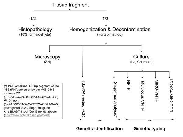 Flowchart of performed tests. ZN, Ziehl-Neelsen staining; LJ, Löwenstein-Jensen medium, charcoal medium, LJ; Middlebrook 7H11 acidified with phosphoric acid, supplemented with sheep blood and charcoal; RFLP, restriction fragment length polymorphism; VNTR, multilocus variable-number of tandem repeats; MIRU, mycobacterial interspersed repetitive unit (MIRU)-VNTR.