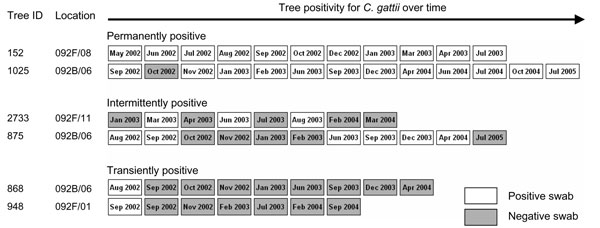Example of longitudinal swab sampling profiles from trees designated permanently, intermittently, or transiently colonized with Cryptococcus gattii. Samples were collected during a 3-year period.