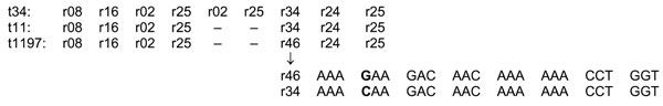 Repeats of the X-region in methicillin-resistant Staphylococcus aureus A of clonal lineage ST398.