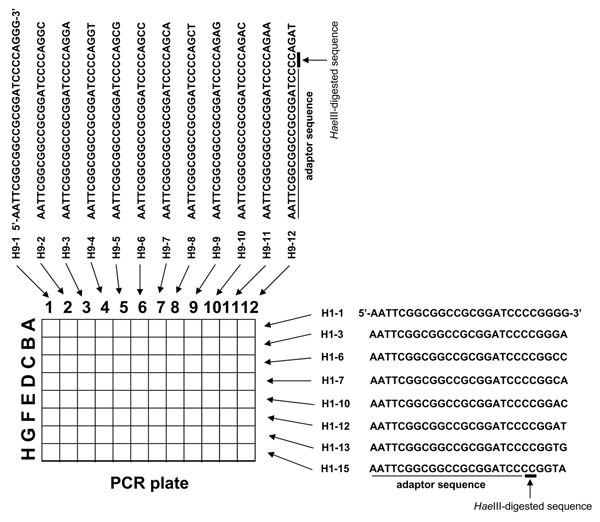 Primers used in rapid determination of viral RNA sequence method.