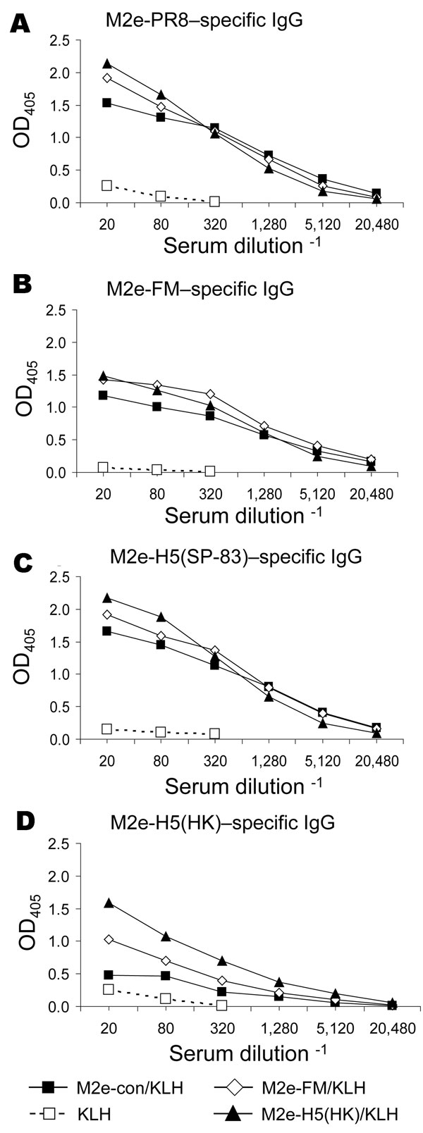 Results of matrix protein 2 (M2)e–keyhole limpet hemocyanin (KLH) vaccination, showing induction of cross-reactive antibody responses. Mice (7–9 per group) were immunized intraperitoneally with KLH or M2e peptides conjugated to KLH (M2e-con/KLH, M2e-FM/KLH, or M2e-H5(HK)/KLH) in complete Freund's adjuvant. After 21 days, the mice were given an intraperitoneal booster with KLH or M2e-peptide/KLH in incomplete Freund's adjuvant. Immune serum was collected 13 days after booster and assayed for immu