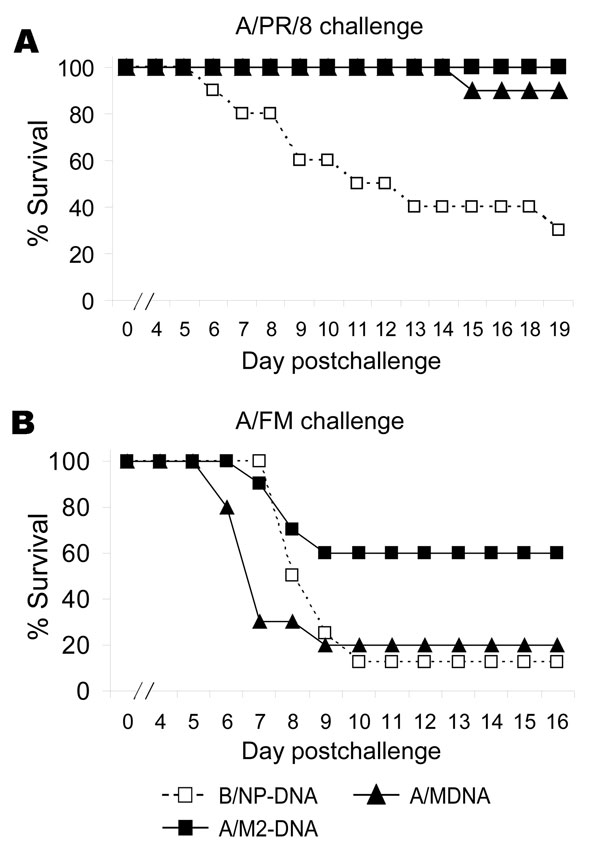 Results of matrix protein 2 (M2)–DNA vaccination, showing protection against divergent influenza viruses. Mice (8–10 per group) were vaccinated with DNA as described in Methods except at a dose of 100 μg/mouse. Approximately 2 weeks after the last dose of DNA, mice were challenged with 7× the 50% lethal dose (LD50) of virus and monitored for survival. A) A/PR/8 challenge: Cumulative survival rate of mice vaccinated with M-DNA or M2-DNA was significantly higher than that of mice vaccinated with B