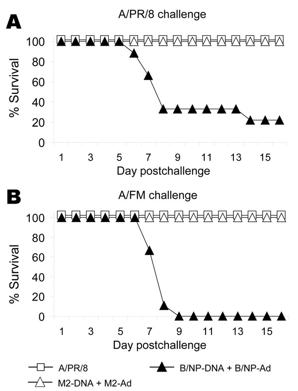 Results of vaccination and booster with DNA prime–adenovirus (Ad), showing cross-protection. Mice (8–10 per group) were immunized as in Figure 4 or intranasally given a sublethal priming infection with A/PR/8. Three weeks later they were challenged with a high dose of A/PR/8 (1.5x 104 50% lethal dose [LD50]) or moderate dose of A/FM (10 LD50) and monitored for survival. The cumulative survival rate for mice immunized with A/PR/8 and M2-DNA+M2-Ad was significantly higher than that for mice immuni