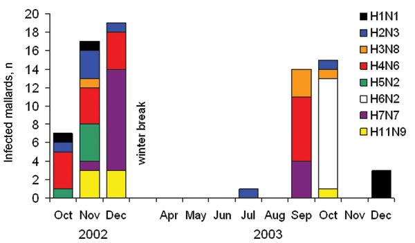 Occurrences of the most common influenza A virus subtype combinations (≥5 isolates) in mallards over time.