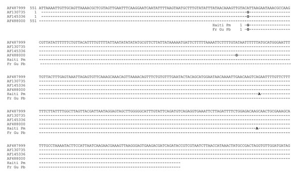 Comparison of Plasmodium malariae (Pm) rRNA gene sequences (GenBank accession nos. AF487999, AF145336, AF488000) and P. brasilianum (Pb) sequences from a monkey from French Guiana (Fr Gu) (AF130735) with isolates from P. malariae of humans from Haiti (Haiti Pm).