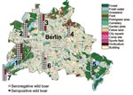 Thumbnail of Map of Berlin showing the regional distribution, numbers of wild boars killed during the 2005–06 hunting season (n = 141), and numbers of wild boars seropositive for antibodies against Leptospira spp. (red). Districts are numbered from 1 to 7 (with permission from the Senate Department of Urban Development, Berlin) and correspond to numbers on Tables 1 and 2.
