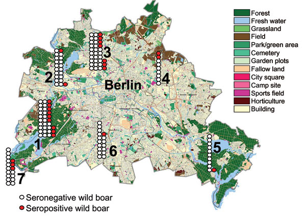 Map of Berlin showing the regional distribution, numbers of wild boars killed during the 2005–06 hunting season (n = 141), and numbers of wild boars seropositive for antibodies against Leptospira spp. (red). Districts are numbered from 1 to 7 (with permission from the Senate Department of Urban Development, Berlin) and correspond to numbers on Tables 1 and 2.
