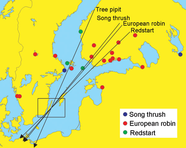 Autumn migration directions (arrows) of tree pipits (Anthus trivialis), robins (Erithacus rubecula), redstarts (Phoenicurus phoenicurus), and song thrushes (Turdus philomelos) banded in southeastern Sweden (area indicated by a square) and recovered within 60 days. Directions: Tree pipit, 203.6º, mean vector length = 0.993, n = 10; robin, 220.5º, mean vector length = 0.928, n = 293; redstart, 225.9º, mean vector length = 0.975, n = 52; and song thrush, 218.8º, mean vector length = 0.947, n = 117. Recovery sites of birds banded in southeastern Sweden and reported from areas north of the banding sites in a following year are also shown as indicated in the legend (no recovery from breeding areas is available for tree pipit).