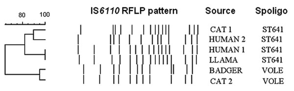 Comparison of the restriction fragment length polymorphism patterns of Mycobacterium microti strains from Scotland. Spoligo, spoligotyping.