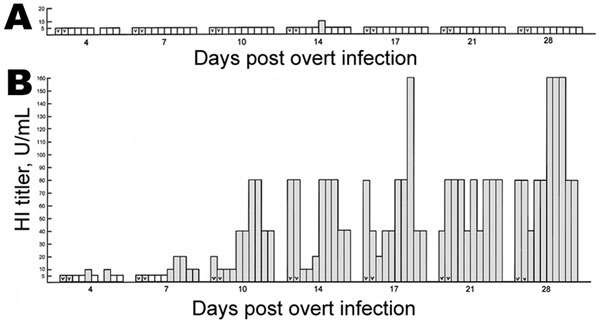 Seroconversion in sentinel specific-pathogen-free white leghorns after natural infection with influenza A/CK/CT/72/03 (H7N2) from overtly infected birds as quantified by hemagglutination inhibition (HI) tests for hemagglutinin (HA) antigen. The titer in HI U/mL is plotted as a function of days post overt infection of 2 birds in each group. The key is similar to that of Figure 1, except the assay is for HI. A, water only; B, water plus recombinant chicken interferon-α at 2,000 U/mL. Results of 1 trial are shown; 2 other trials gave similar results.