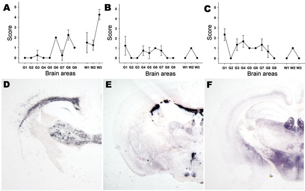 Lesion profiling (A, B, C) and paraffin-embedded tissue blot characterization of prion protein (PrPSc) deposition at thalamic level (D, E, F). Tests were performed by using formalin-fixed brain from Tg338 mice (expressing the VRQ PrP ovine variant) inoculated with (A, D) ARR/ARR atypical case (B, E) bovine spongiform encephalopathy (BSE) brain from an ARR/ARR sheep (intracerebral inoculation), and (C, F) case S83. Each lesion profile was carried out by using 6 animals. Detection of PrPSc was achieved by using the monoclonal antibody Sha31.