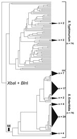 Thumbnail of Simultaneous cluster analysis of Salmonella Enteritidis and S. Typhimurium that used a standard XbaI/BlnI combined PFGE protocol. The dendrogram incorporates 76 S. Enteritidis strains and 74 S. Typhimurium strains and depicts the contrasting ability of pulsed-field gel electrophoresis (PFGE) to genetically differentiate these 2 Salmonella subspecies I serovars. The dendrogram was generated in BioNumerics v.4.061 (Applied Maths, Sint-Martens-Latem, Belgium) by using band-matched XbaI/BlnI PFGE data in conjunction with an unweighted pair group method with arithmetic mean clustering algorithm and a Dice similarity coefficient. Shaded cones to the right of terminal tree branches denote polytomies within the dendrogram; adjacent numbers (n) show the strain totals composing that polytomy. An arrow near the bottom of the tree denotes the basal branch of the S. Enteritidis cluster. The S. Enteritidis portion of the dendrogram comprises strains isolated from Georgia (n = 31), Maryland (n = 8), Pennsylvania (n = 3), Connecticut (n = 3), North Carolina (n = 2), Iowa (n = 2), Tennessee (n = 2), Minnesota (n = 1), Mexico (n = 11), and the People's Republic of China (n = 6).
