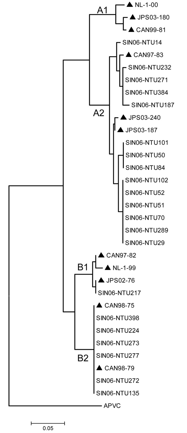 Phylogenetic analyses of nucleotide sequences of HMPV phosphoprotein showing comparisons with Singapore-Nanyang Technological University (SIN06-NTU*) sequences. *The specimen number acquired during the course of the investigation (e.g., SIN06-NTU14) was made with known strains (highlighted ▲) from Canada [CAN99-81 (AY145294, AY145249), CAN97-83 (AY297749), CAN97-82 (AY145295, AY145250), CAN98-75 (AY297748), CAN98-79 (AY145293, AY145248)], Japan [JPS03-180 (AY530092), JPS03-240 (AY530095), JPS03-187 (AY530093), JPS02-76 (AY530089)], and the Netherlands [NL-1-00 (AF371337), NL-17-00 (AY304360), NL-1-99 (AY525843), NL-1-94 (AY304362)]. Avian pneumovirus type C (APVC AY590688) was used as the outgroup.