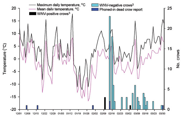 Crow deaths associated with West Nile virus (WNV) infection and maximum and mean temperatures for Poughkeepsie, New York, USA (December 1, 2004–March 31, 2005). Roost area was checked for crow carcasses at least every 48 hours after February 10, 2005. Temperature data were obtained from National Oceanic and Atmospheric Administration, Silver Spring, Maryland, USA. All 98 crow carcasses were tested for WNV by reverse transcription–PCR (RT-PCR) (2), VecTest, and Rapid Analyte Measurement Platform (3,4). Twelve were positive by all 3 tests; 1 crow collected on March 7, 2005, was positive by RT-PCR only.