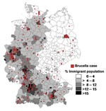 Thumbnail of Regional distribution of brucellosis cases and percentage of immigrants per county, Germany, 1995–2005.