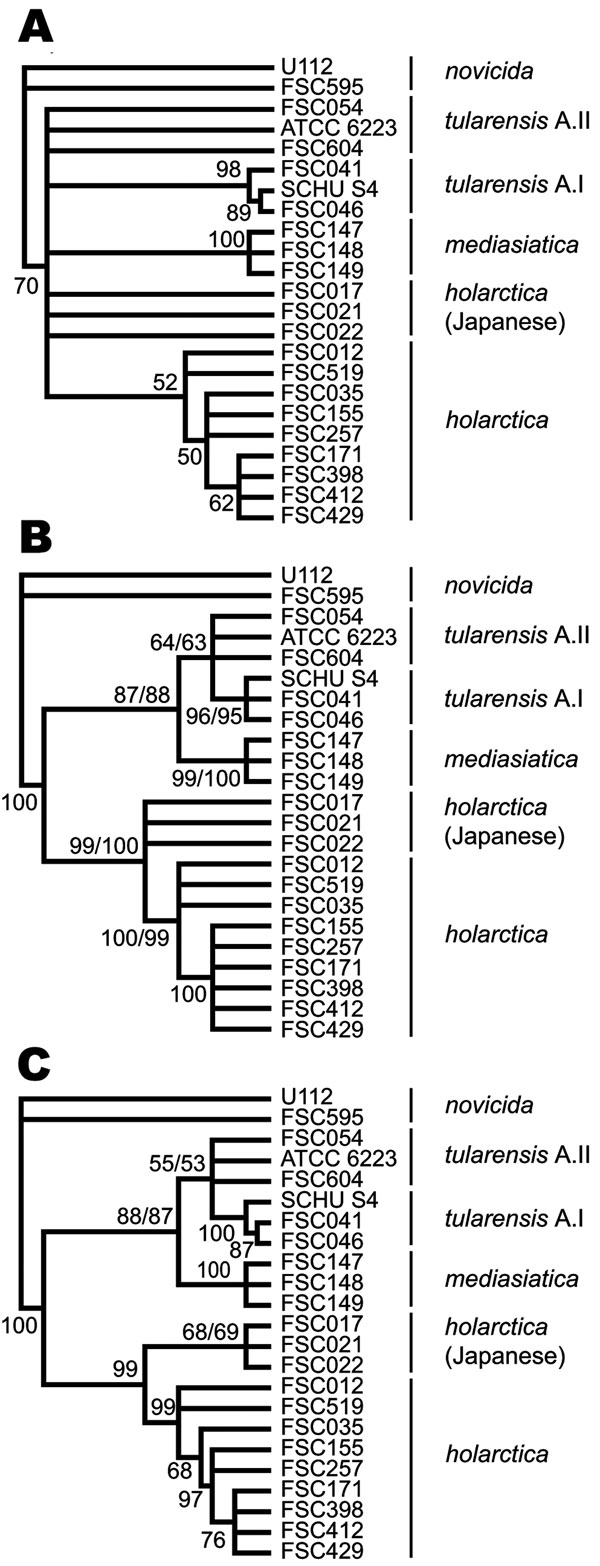Cladograms depicting relationships among Francisella tularensis strains obtained by maximum parsimony and bootstrap analysis that used indel, multilocus variable-number tandem repeat analysis (MLVA), or combined data. Nodes supported by <50% of bootstrap pseudoreplicates were collapsed. A) Cladogram obtained solely from the use of MLVA data. B) Cladogram from the use of indel data. C) Cladogram from the combined use of indel and MLVA data. The dual bootstrap support values presented represent the use of each of 2 alleles, found at locus Ftind-32 of strain ATCC 6223.