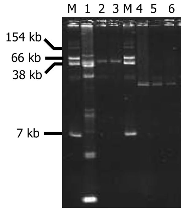 Plasmid DNAs from Aeromonas punctata 37 and A. media 42 and their Escherichia coli TOP10 transformants (TF) carrying plasmids p37 or p42. Lanes: 1, A. punctata 37; 2, E. coli TOP10/p37 TF-1; 3, E. coli TOP10/p37 TF-2; 4, A. media 42; 5, E. coli TOP10/p42 TF-1; 6, E. coli TOP10/p42 TF-2; M, E. coli NCTC 50192 (used as reference for plasmid sizes).