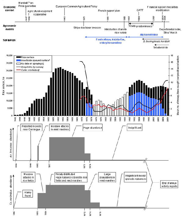 Changes in vector abundance and rice cultivation related to economic and agronomic contexts in the Camargue, France. Ha, hectares. Rice surface, insecticide-sprayed surface, and human mosquito-landing collection data were smoothed with a centered moving average (running mean) of 3 years to filter short-term variations. *Insecticide sprayed surface, only insecticides having an effect on mosquito larvae (i.e., fenithrotion, trichlorfon, chlorphenamidine, and alphamethrin) were included; surfaces sprayed with lepidopteron-specific insecticide (i.e., tebufenozide and Bacillus thuringiensis kurstaki) were not included. Sprayed surfaces were precisely known from 1972 to 1974 and from 2000 to 2006 and were estimated from 1990 to 1999. ‡Anopheles hyrcanus is the main potential malaria vector, and Culex modestus is the main West Nile virus vector in the Camargue. §No data on sprayings, years 1975–1989, for which no quantitative data on sprayed surfaces were available.