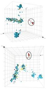 Thumbnail of Principal component analysis analysis of the amplified fragment length polymorphism data obtained for the pig-associated methicillin-resistant Staphylococcus aureus sequence type 398 (ST398 MRSA) and its closely related methicillin-susceptible S. aureus (MSSA) strains, carriage MSSA isolates from healthy children and elderly persons, invasive MSSA from hospitalized children and elderly persons, and invasive animal S. aureus isolates (including 2 MRSA isolates). The cubes, plotted in 3-dimensional space, represent all of the strains displayed in Figure 1, panel A. Each axis represents the score calculated for that strain on each principal component. The distribution is shown from 2 different angles. ST398 strains are circled. Blue, carriage isolates (n = 829); black, bacteremia isolates (n = 146); yellow, animal isolates (n = 77); red, ST398 MRSA isolates (n = 46); pink, reference strains (Mu50/N315).