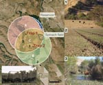 Thumbnail of Left: aerial (2 m) photograph of ranch A showing overlapping circular buffer regions around feral swine trap 1 and trap 2 (San Benito Crop Year 2006; Image Trader, Flagstaff, AZ). The radius for the buffer (1.8 km) is the circumference of the mean home range for feral swine in mainland California (8). Estimated density = 4.6 swine/km2 and total area = (A + B + C) – D = 14.8 km2. Areas A, B, and C, combined with counts of individual feral swine from October through November 2006, were used to calculate the average population density. Bottom left: digital infrared photograph of feral swine at trap 1. Right: potential risk factors for Escherichia coli O157:H7 contamination of spinach at ranch A: 1) Feral sow and piglets sharing rangeland with cattle; 2) feral swine feces, tracks, and rooting in a neighboring spinach field; 3) cattle in surface water.
