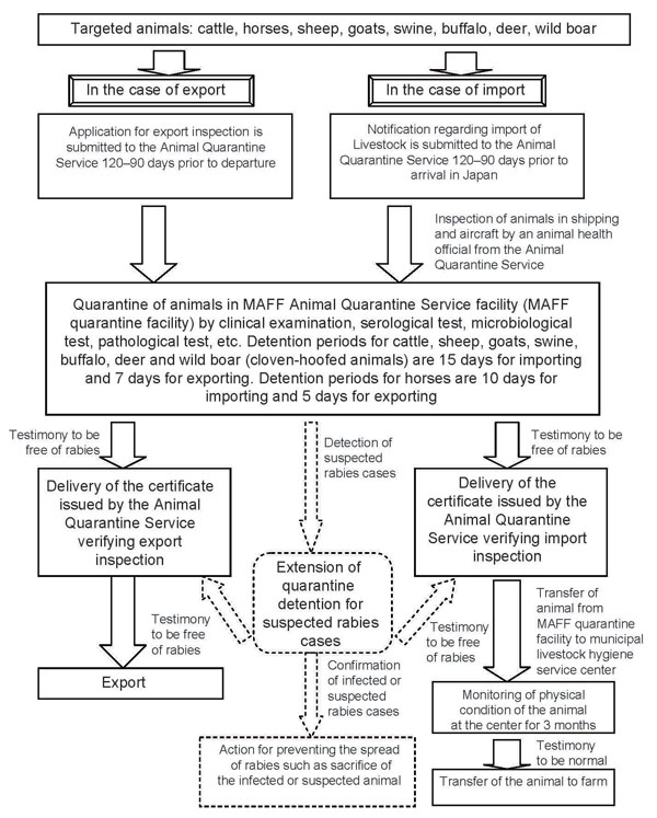 Flowchart of the inspection for rabies infection for importing and exporting animals under the Domestic Animal Infectious Diseases Control Law. The figure is based on our interpretation of data from reference (25). Dashed lines show emergency countermeasures. MAFF, Ministry of Agriculture, Forestry and Fisheries.