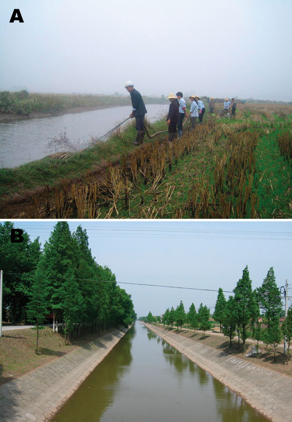 A) Mollusciciding with niclosamide for the control of Oncomelania snails in marshland between Dongting Lake and an embankment. B) Environmental modification to control Oncomelania breeding sites through canalization of water streams in Hunan Province.