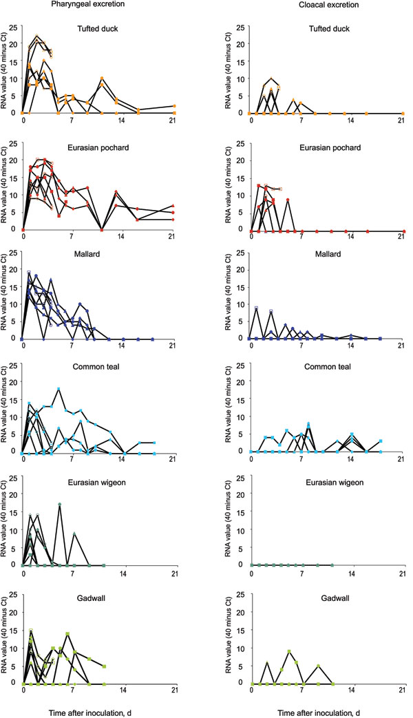 Individual pharyngeal (A) and cloacal (B) excretion of highly pathogenic avian influenza virus (H5N1) in wild duck species, by reverse transcription-PCR.