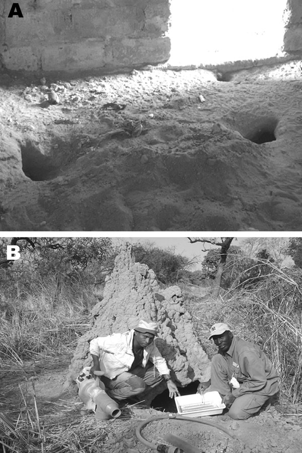 Favorable and unfavorable habitats examined for Ornithodoros sonrai. A) Favorable rodent or insectivore burrows infested with O. sonrai inside pig buildings. B) Unfavorable warthog burrows negative for O. sonrai dug under a termite mound. The portable gasoline-powered vacuum cleaner used for tick collection is also shown.