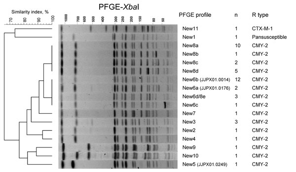Representative XbaI pulsed-field gel electrophoresis (PFGE) profiles of third-generation cephalosporin–resistant Salmonella Newport isolates studied. A dendrogram was generated with Bionumerics software (Applied Maths, Sint-Martens-Latem, Belgium). The PFGE profile (and if there were indistinguishable isolates in the PulseNet USA database [www.cdc.gov/pulsenet], the corresponding Centers for Disease Control and Prevention PulseNet profile), the number of isolates, and the β-lactamase genes are indicated.