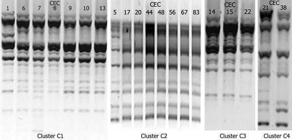 Results of repetitive extragenic palindromic–PCR of Escherichia coli isolates belonging to the 4 clusters, Cambodia, 2004–2005. CEC, Cambodian E. coli.