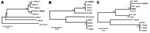 Thumbnail of Figure 2 - Phylogenetic trees of simian foamy virus (SFV) sequences derived from 3 persons. Human-derived SFV sequences (shown in boldface) were compared with those obtained from macaques of the group with which the person had been in contact and to SFV from other macaques of the same species but different geographic origin. Neighbor-joining trees A and B used gag PCR primers (1,124 bp), and C used pol PCR primers (445 bp). A) SFV gag–derived from BGH4 DNA clusters more cl