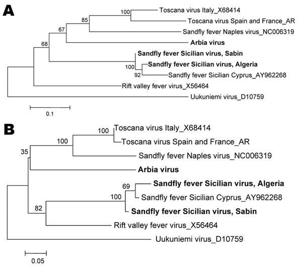 Phylogenetic analysis of Sandfly fever Sicilian virus, Algeria, based on A) 207-nt or B) 67-aa sequence in the polymerase gene. Distances and groupings were determined by the pairwise or Kimura 2-parameter algorithm and neighbor-joining method with the MEGA v2 software program (www.megasoftware.net). Bootstrap values are indicated and correspond to 500 replications. Boldface indicates virus names that correspond to sequences determined in this study. Scale bars indicate pairwise nucleotide distances (0.1 = 10%) and Kimura 2-parameter amino acid distances (0.05 = 5%).