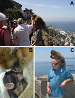 Thumbnail of A) Each year >700,000 tourists visit Gibraltar's Upper Rock Reserve, contributing millions of dollars to the local economy. B) Tourists find Gibraltar' macaques compelling. C) Tour guides use food to entice macaques to perch on visitors, potentially exposing the visitors' mucous membranes to macaque body fluids, a potential route for cross-species transmission of enzootic macaque viruses.