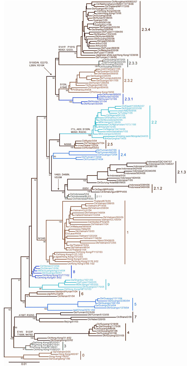 Neighbor-joining tree of 158 H5N1 isolates constructed by using PAUP* version 4.0b10 (9). Estimates of the phylogenies were calculated by performing 1,000 neighbor-joining bootstrap replicates. Distinct amino acid residues shared only by isolates within a particular clade are shown on the line above the clade-defining node when present. Amino acid substitutions represent change relative to Gs/GD/1/96. The small tree was rooted at the clade 0 node for larger scaling. Scale bar represents 0.01-nt