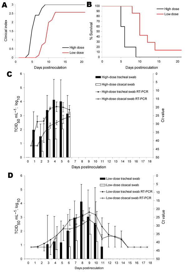 Figure 1 - Clinical indices, mortality, and viral shedding of naive mute swans after inoculation with A/Cygnus cygnus/Germany/R65/2006 highly pathogenic influenza virus subtype H5N1. A) All animals were observed daily for up to 21 days for clinical signs and classified as healthy (0), ill (1), severely ill (2), or dead (3). A clinical index was calculated that represents the mean value of all naive swans per group for this period. B) Percentage survival of swans expressed as mean value
