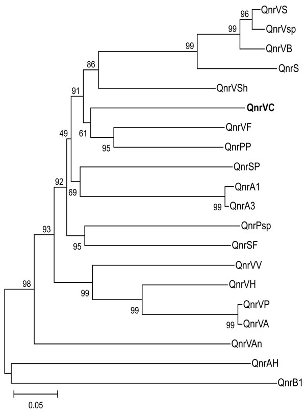 Genetic relationships of plasmid- and chromosome-encoded qnr proteins. Species and GenBank accession nos. are as follows. QnrVS (Vibrio splendidus, EAP95542), QnrVsp (Vibrio sp., EAQ55748), QnrS1 (Shigella flexneri, BAD88776), QnrVC (V. cholerae, strain 627; EU436855; this work, shown in boldface); QnrPP (Photobacterium profundum, YP132629), QnrVF (V. fisheri, AAW85819), QnrSP (Shewanella pealeana, EAV99957), QnrA1 (Escherichia coli, AAY46800), QnrA3 (S. algae, AAZ04782), QnrPsp (Psychromonas sp., EAS39797), QnrSF (S. frigidimarina, ABI71948), QnrVV (V. vulnificus, AAO07889), QnrVP (V. parahaemolyticus, BAC61438), QnrVA (V. alginolyticus, EAS75285), QnrVAn (V. angustum, EAS64891), QnrAH (Aeromonas hydrophila, ABK38882), QnrB1 (Klebsiella pneumoniae, ABG82188), QnrVSh (V. shilonii, EDL55273), QnrVB (Vibrionales bacterium, EDK31146), QnrVH (V. harveyi, EDL69958). Support of the branching order was determined by 1,000 interior branch test replicates. The distance-based tree was generated by using p distance with the neighbor-joining method with MEGA version 3.1 (www.megasoftware.net). Values along the horizontal lines are the interior-branch test percentages after testing 1,000 topologies. Scale bar indicates the number of substitutions per alignment site, which is reflected by branch lengths.