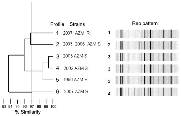 Repetitive sequence–based, PCR–generated dendrogram for 43 Shigella sonnei isolates obtained from sporadic or outbreak cases during 1996–2007 in the Paris area. Isolates with >97% similarity were considered to be closely genetically related. Profile 1) representative of the 32 isolates of the 2007outbreak with azithromycin (MIC >256 mg/L by Etest) . Profile 2) 1 of 6 isolates from sporadic cases (2003–2006) with azithromycin MIC <16 mg/L. Profile 3) representative isolate Shi 03-3580 from 2003 outbreak with azithromycin MIC <16 mg/L by Etest. Profile 4) representative isolate Shi 02-9633 from 2002 outbreak with azithromycin MIC <16 mg/L by Etest. Profile 5) representative isolate Shi 96 1420 from 1996 outbreak with azithromycin MIC <16 mg/L by Etest. Profile 6) isolate from 2007 with azithromycin MIC <16 mg/L by Etest; another AZM S 2007 isolate had an identical profile. AZM, azithromycin; R, resistant; S, sensitive; Rep, repetitive sequence-based PCR.
