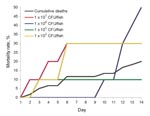Thumbnail of Mortality rates for 60 Nile tilapia at all doses (black line) and 10 tilapia each challenged with a human Streptococcus agalactiae isolate (#510012): 102 (gray line), 103 (green line), 106 (red line), and 107 (blue line) CFU/fish. No deaths occurred at 104 and 105 CFU/fish or in tryptic soy broth controls.
